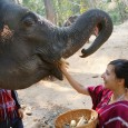 Everyone says you've got to see the elephants when you go to Thailand. Unlike most people I know Dan and I are just not animal people. We've never really been. […]