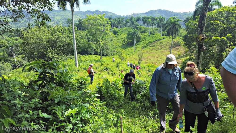 Reforestation project in dominican republic